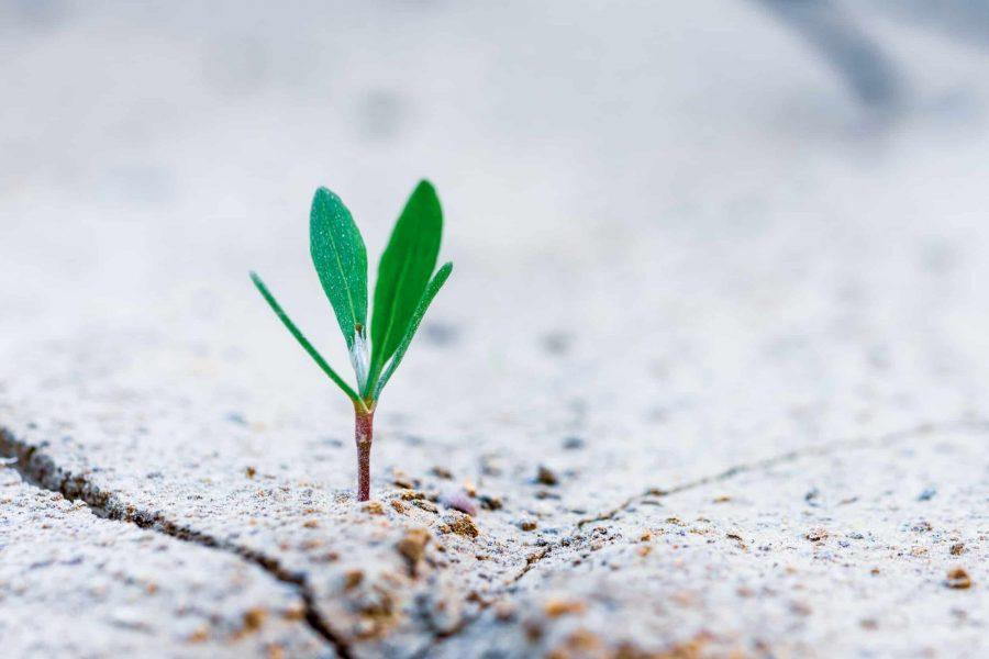 growth mindset implementation